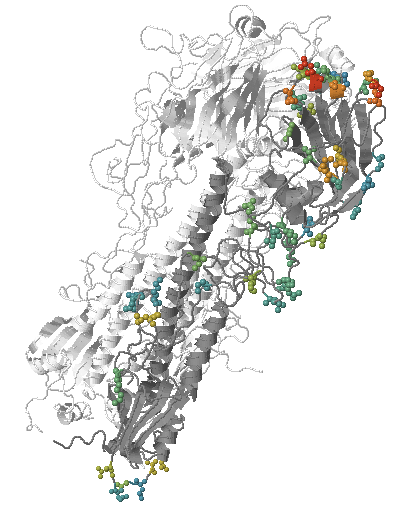 Mutations with antigenic effects highlighted on a HA structure